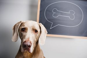 """Der Hundeknochen-Effekt heißt so, weil die im Comic gerne genutzte Symbolik des Hundeknochens den Effekt so bildhaft beschreibt. Im Bild sieht man einen Hund mit einer Gedankenblase an einen Hundeknochen """"denkt""""."""